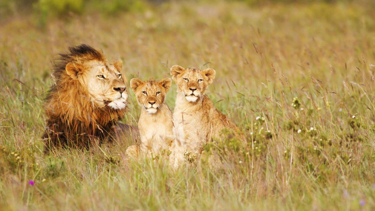 Pacote de Viagem - África do Sul: Cape Town e Kruger em Família